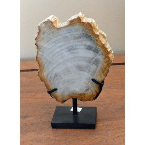 Petrified Wood Decor – 1F