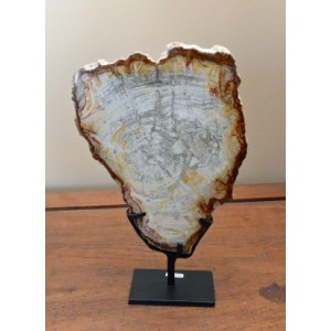 Petrified Wood Decor – 30